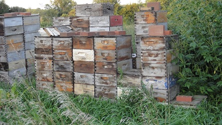 Eight Frame Hive